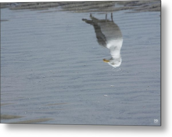 Gull At The Beach Metal Print