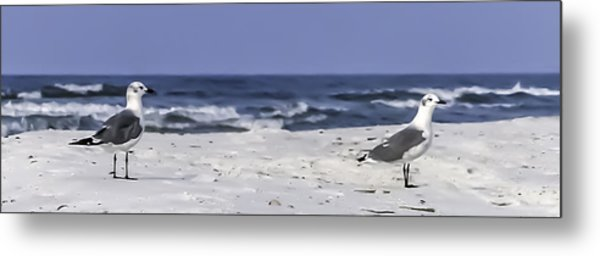 Gulls By The Sea Metal Print by CarolLMiller Photography