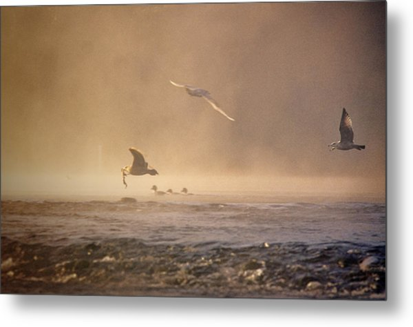 Gulls In The Fog Metal Print