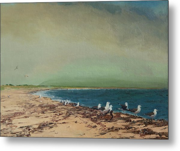 Gulls On The Seashore Metal Print