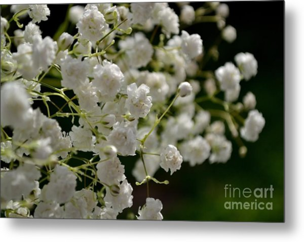 Metal Print featuring the photograph Gypsophilia by Scott Lyons