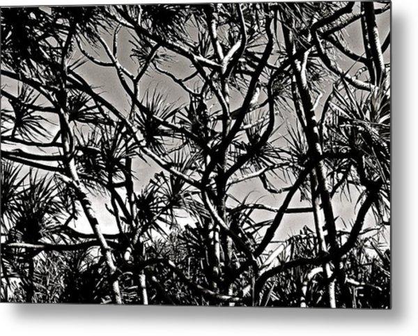 Hala Trees Metal Print