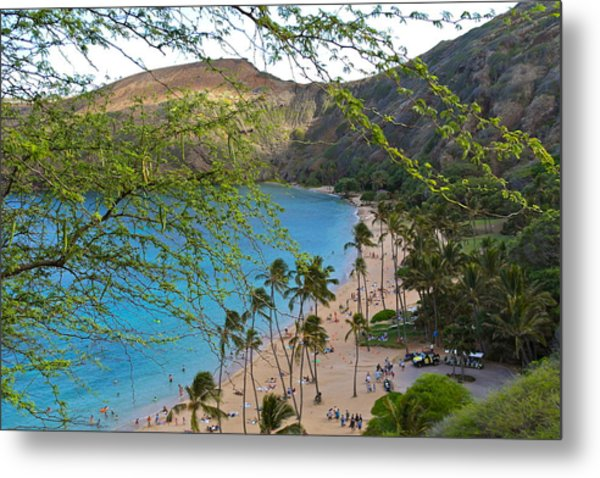 Hanauma Bay Nature Preserve Beach Through Monkeypod Tree Metal Print