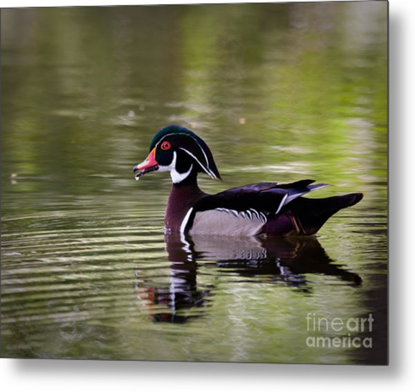 Handsome One Metal Print