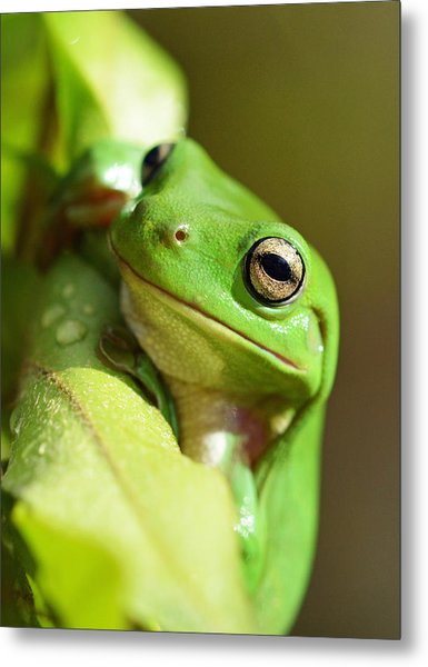 Hang In There Frog Metal Print