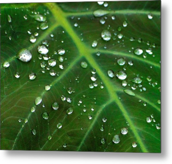 Hanging Droplets Metal Print