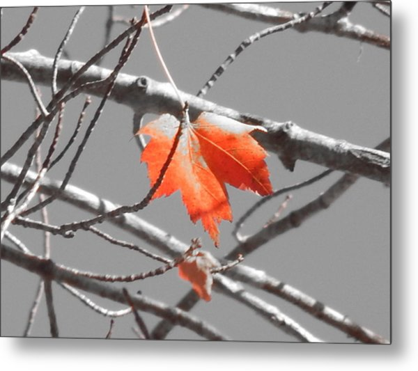 Hanging In There Metal Print by Timothy Caron