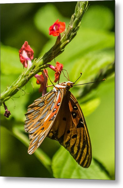 Hanging Off The Side Metal Print