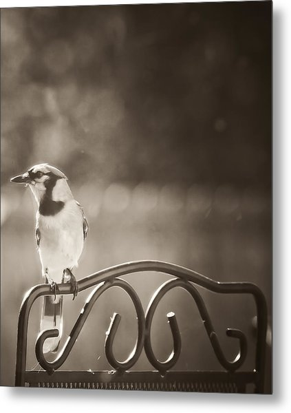 Hanging Out In The Garden Metal Print