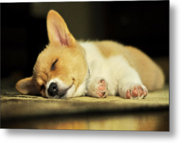 Happiness Is A Warm Corgi Puppy Metal Print