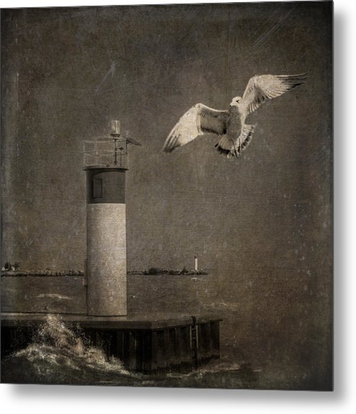 Happy And Free As A Seagull Metal Print