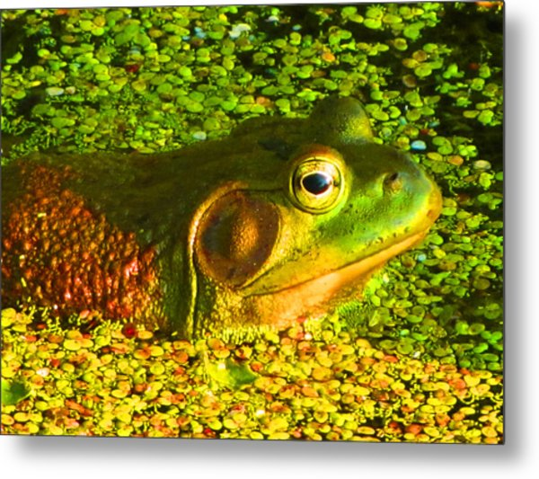 Happy As A Frog In A Pond Metal Print