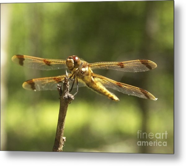 Happy Dragonfly Metal Print