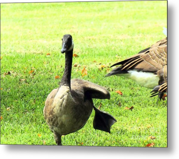 Happy Feet Dance Metal Print