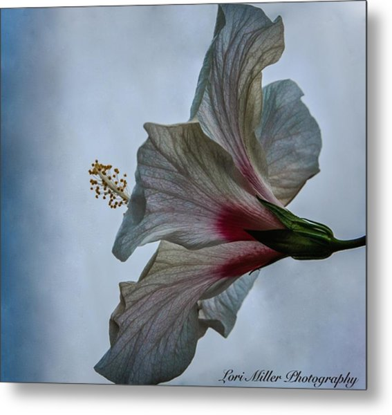 Happy Hibiscus At Biltmore Conservatory Metal Print