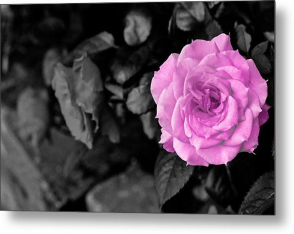 Happy Mother's Day Metal Print by Donald Chen