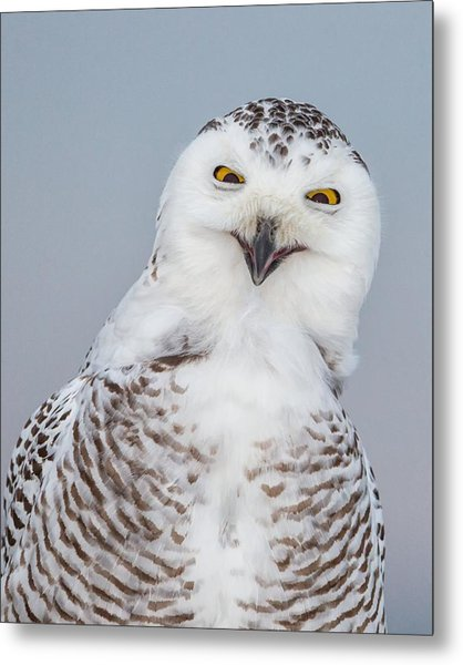 Happy Snowy Owl Metal Print