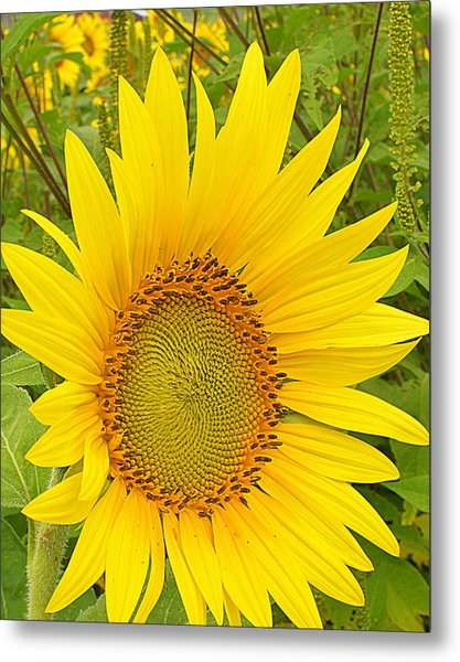 Happy Sunflower Metal Print