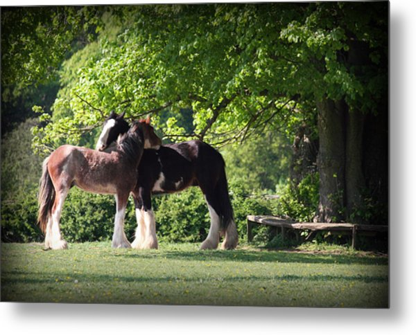 Happy Together Metal Print by Stephen Norris