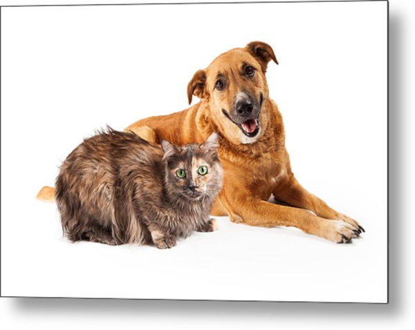 Happy Yellow Dog And Persian Cat Metal Print