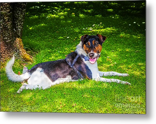 Harley Resting In Dappled Shade Metal Print