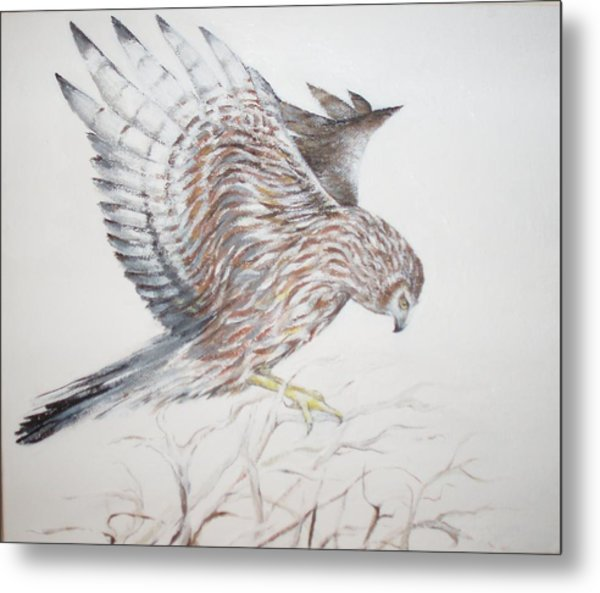Harrier Hen Metal Print