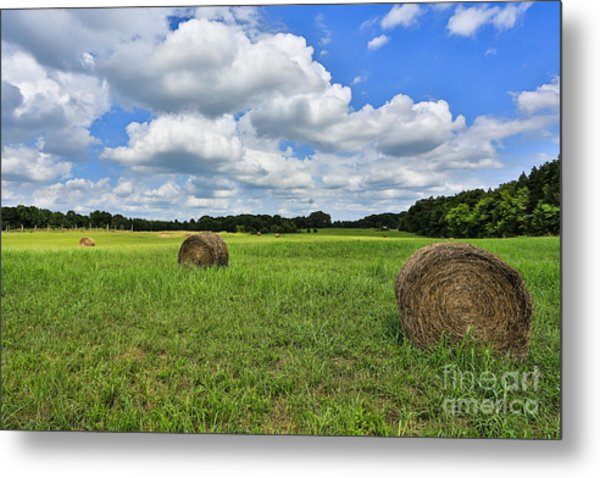Harvest Metal Print by Mina Isaac