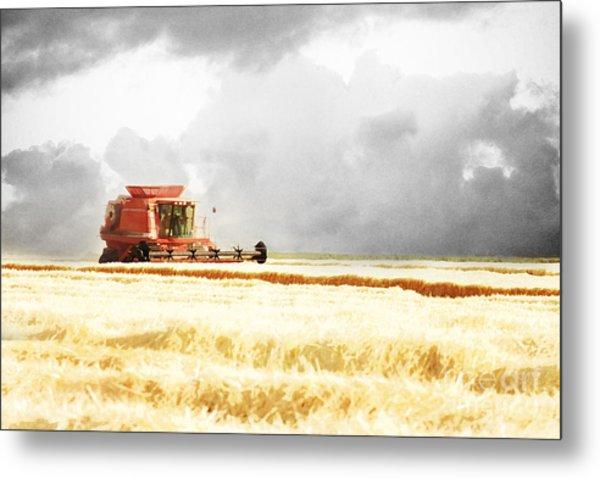 Harvesting The Grain Metal Print