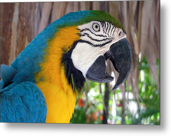 Harvey The Parrot 2 Metal Print