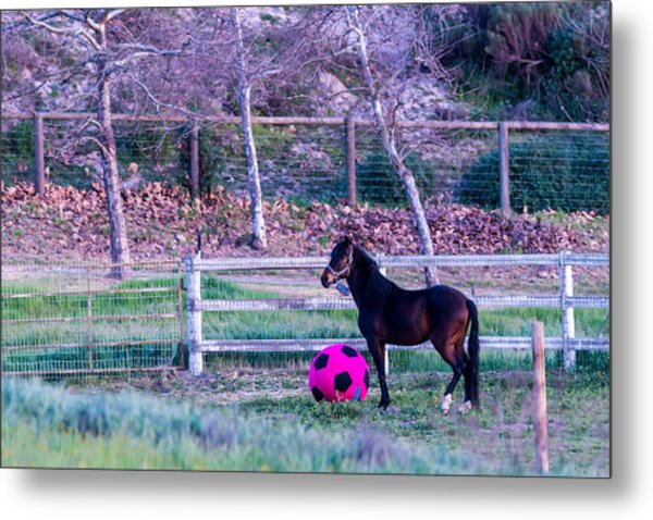 Having A Ball Metal Print