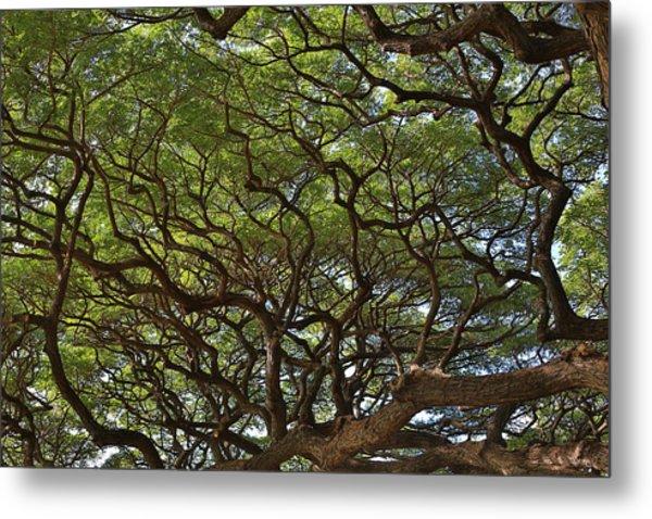 Hawaiian Banyan Tree Metal Print by Sam Amato