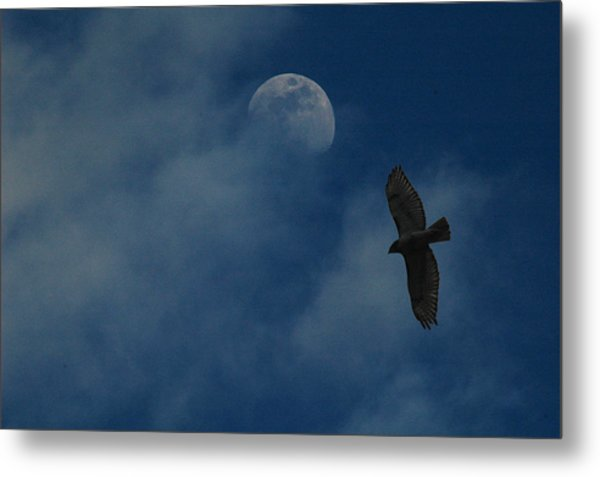 Hawk And Moon Coming Out Of The Mist Metal Print