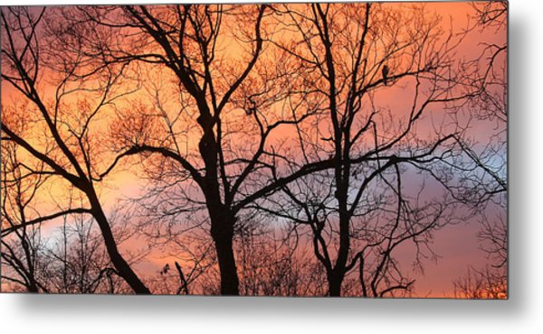 Hawk At Sunrise Metal Print