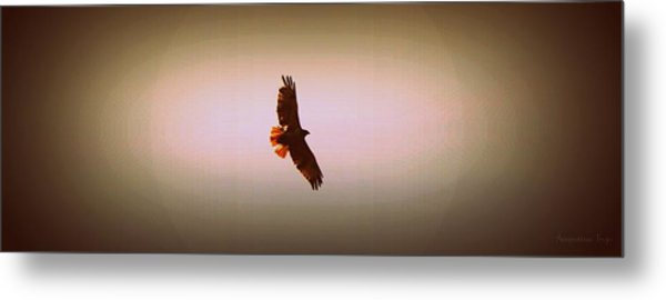 Hawk Eyes II Metal Print by Augustina Trejo