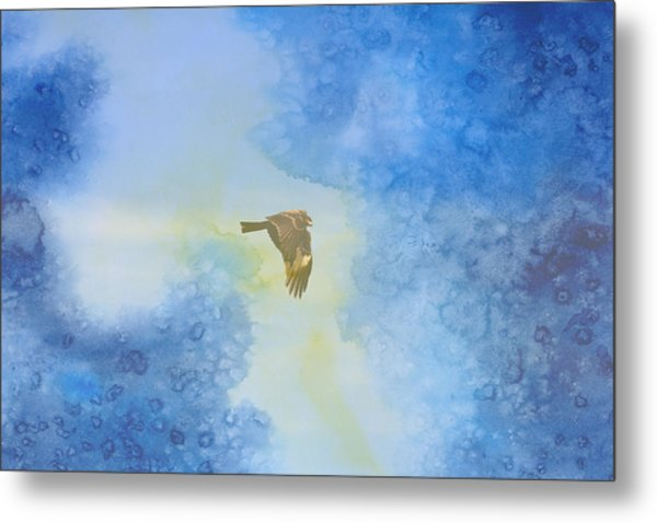 Hawk In Flight 2 Metal Print