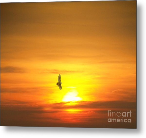 Hawk Into The Sunset Metal Print