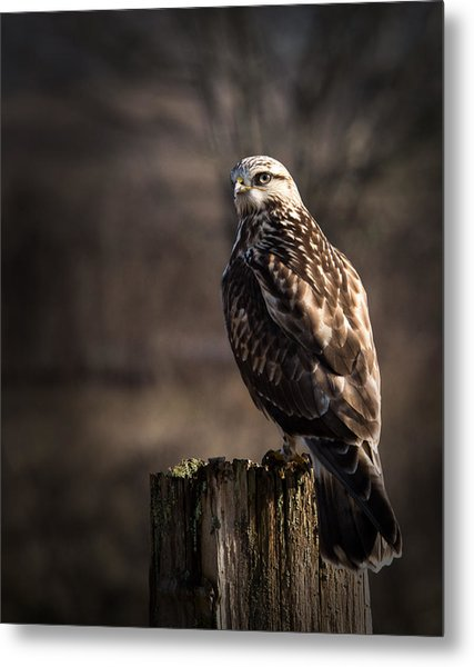 Hawk On A Post Metal Print