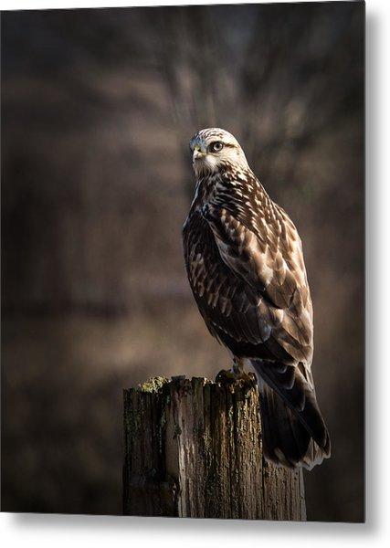 Hawk On A Post Metal Print