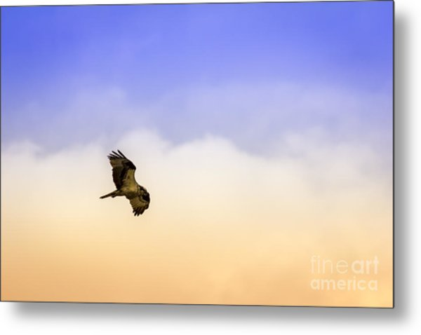 Hawk Over Head Metal Print
