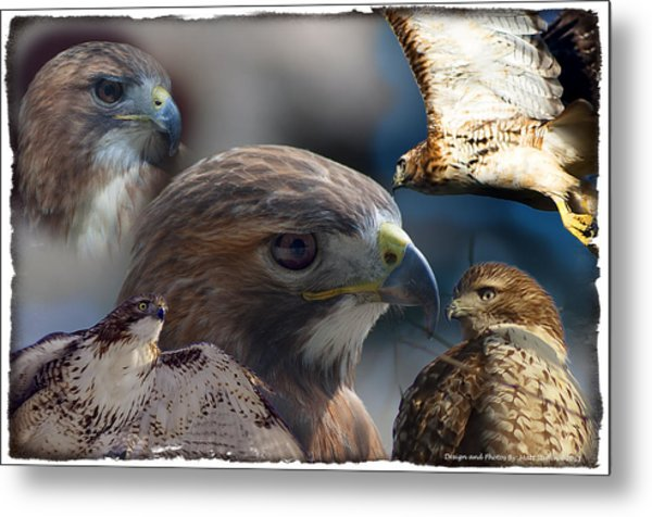 Hawks Metal Print