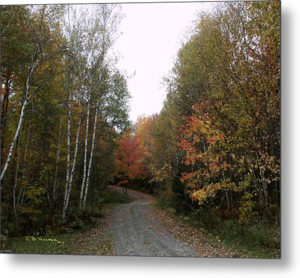 Hazens Notch Vermont Metal Print