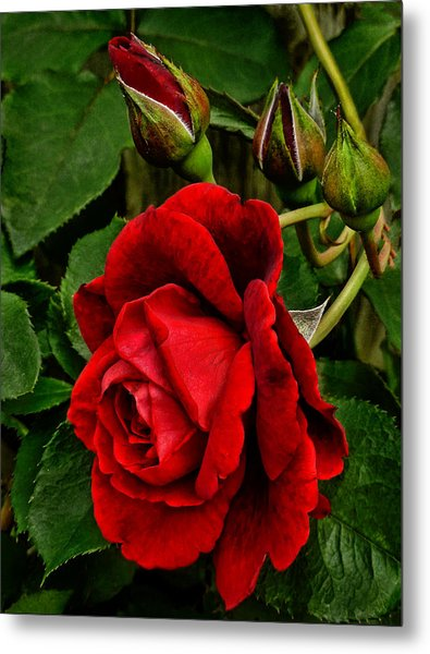 Hdr Rose Metal Print