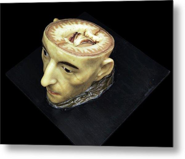 Head And Brain Model Metal Print