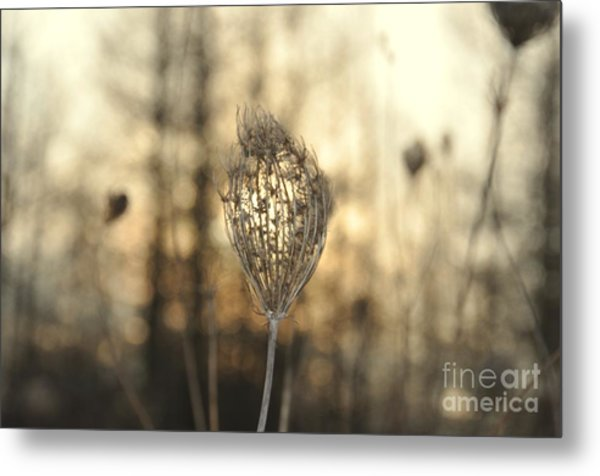 Head Of The Forest Metal Print