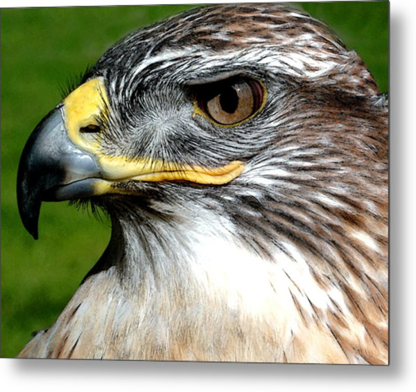Head Portrait Of A Eagle Metal Print
