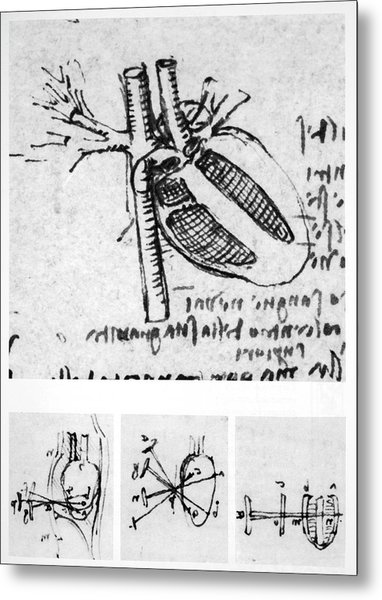 Heart Anatomy Metal Print by