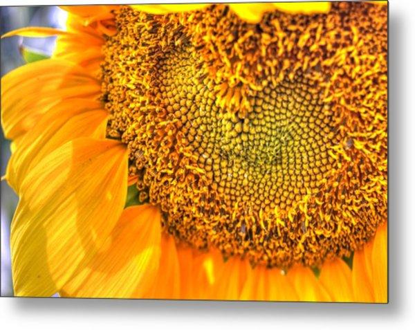 Heart-felt Sunflower Metal Print