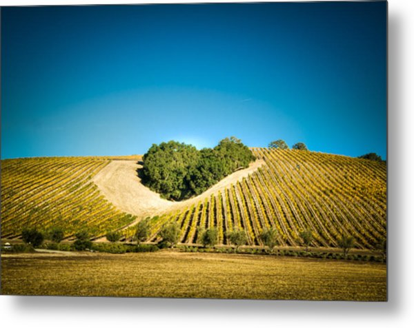 Heart Hill 2 Metal Print by Connie Cooper-Edwards