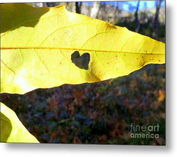 Heart Leaf Metal Print