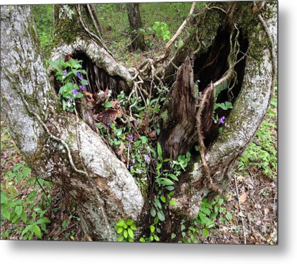 Heart-shaped Tree Metal Print